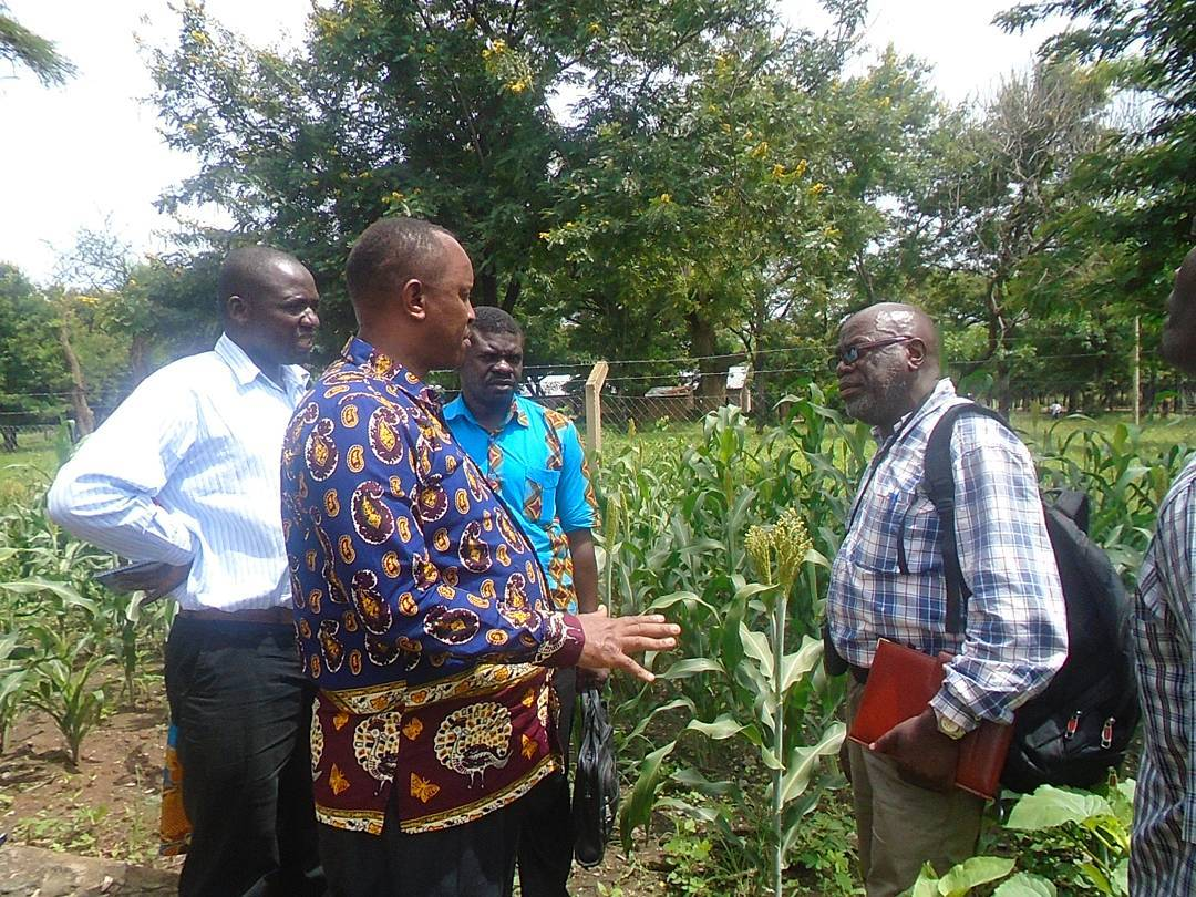 Field Visit of District commissioner from Songwe district to food security project on sorghum crop performance